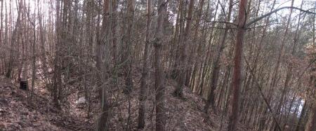 hradove-strimelice-borovice
